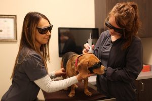 Laser Therapy - Class 4